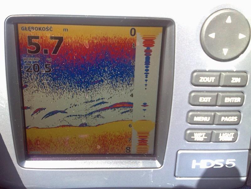 pikefinder.pl/images/photoalbum/album_18/sum_siluro_sumy_catfish_silure_50102c476f1ab_forumsumowe.jpg