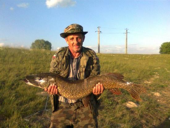 pikefinder.pl/images/photoalbum/album_3/sum_siluro_sumy_catfish_silure_4fce49ae6630f_forumsumowe.jpg